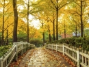 fall-w1024-h1024
