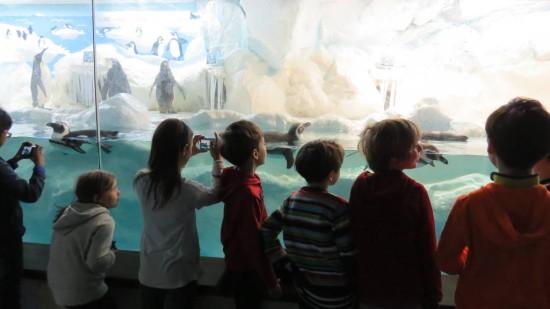3.Klasse_Aquarium